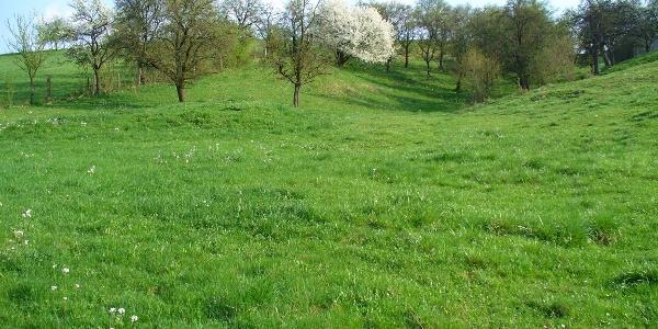 Buckelwiesen am Totenbach