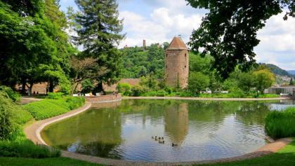 Die grüne Meile Weinheims zieht sich von der Altstadt bis in den Exotenwald
