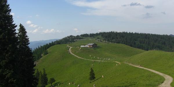 Blick auf die Putzwiese und Almröserlhaus. Standort Edelweishütte (17.06.2012)