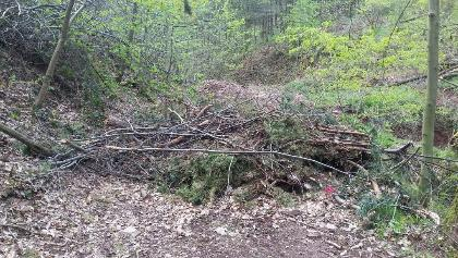 Blockierter Weg am Buchholzener Weiher (April 2017)