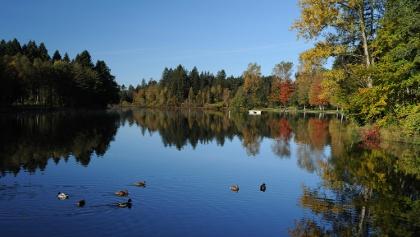 In Herbstfarben leuchten die Bäume rund um den See.