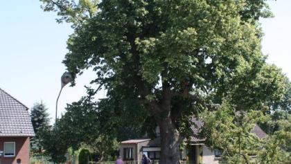 Radlerrast Eiche Blankenförde