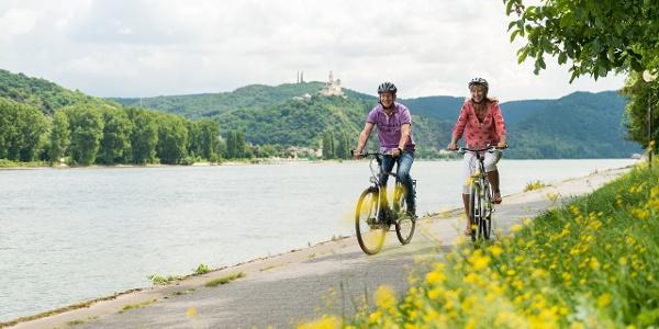 Rheinradweg bei Brey