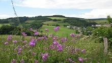 Medebacher Bergweg