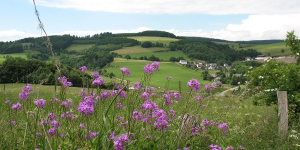 Medebacher Bergweg - Rundwanderung durch die Toskana des Sauerlandes