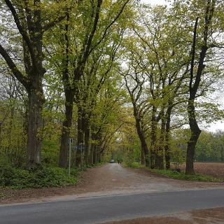 Am Rande des Lauersforter Wald