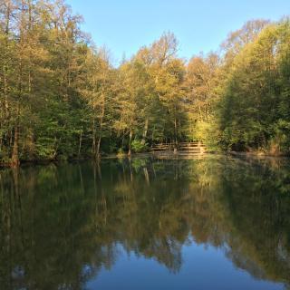 Waldsee Bad Rappenau