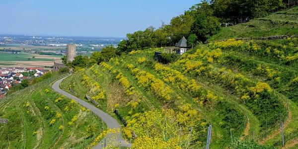 Burgenweg Richtung Schauenburg