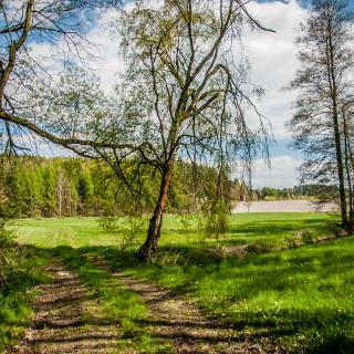 Zwischen Talsperre Wolfersgrün und dem Rückweg