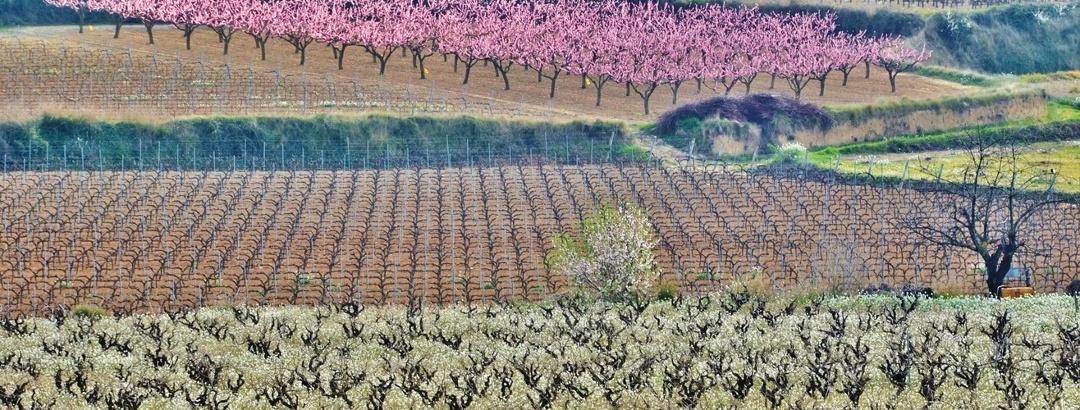 Frühling in Katalonien
