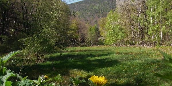 Blick ins Meisenbachtal