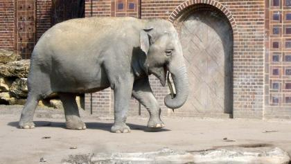 Elefant im Zoo Leipzig