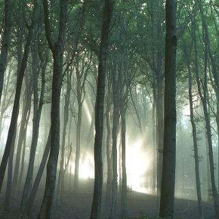 Verwunschener Wald...Hier soll vor wenigen Jahrhundet noch Schlachtengetümmel geherrscht haben. Heute kaum noch vorstellbar.