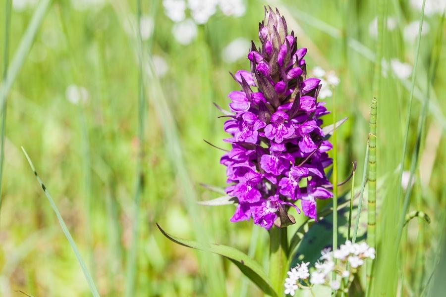 Orchideenpfad
