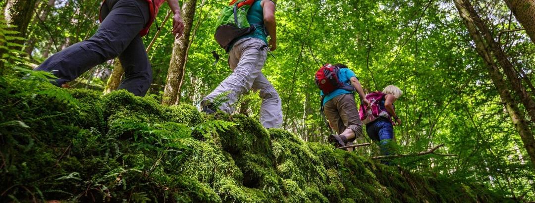 Wandern auf Wald- und Wiesenpfaden