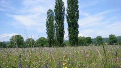 Rietheimer Feld