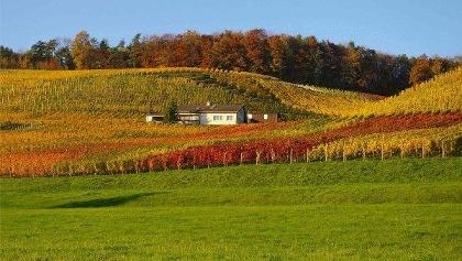 Weingut Alter Berg, Tegerfelden