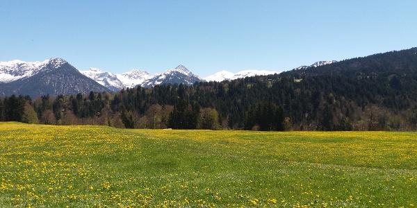 Wiese, Wald und Berge bei Oberstdorf
