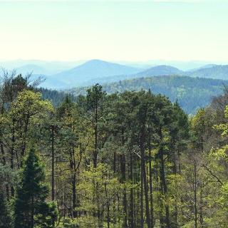 Pfälzerwald Blick vom Schänzejturm