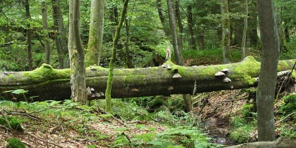 Naturbelassen und Wildromantisch - das Elendstal zwischen Elend und Schierke