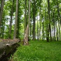 Naturerbe-Buchenwald