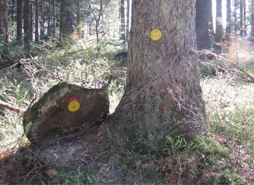 Dukaten im Wald