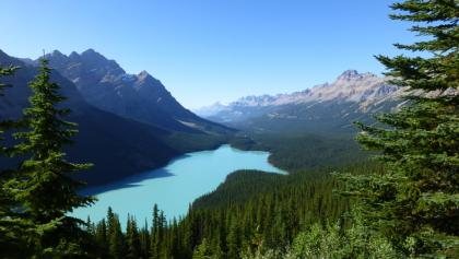 Der Peyto Lake