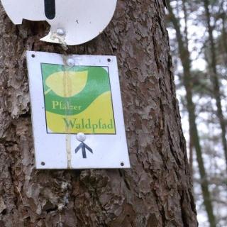 Folge dem Premiumweg des Pfälzer Waldpfades