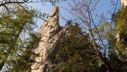der Große Turm ist durch die Bäume zu erkennen