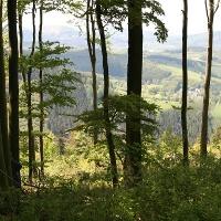 Hangwälder am Olsberg