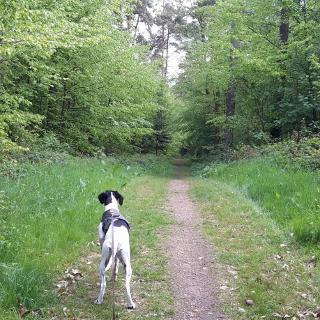 Tolle  Wege durch den Wald