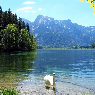 Idylle am Almsee-Ostufer