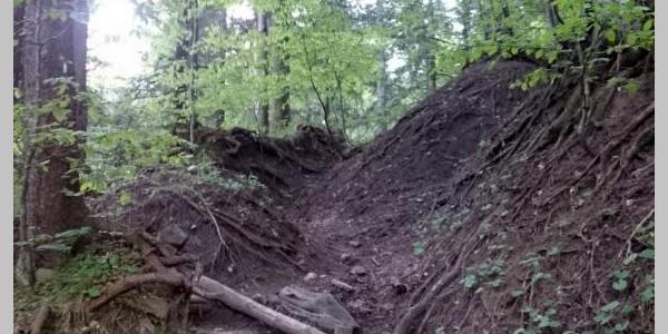 Aufstieg im Wald