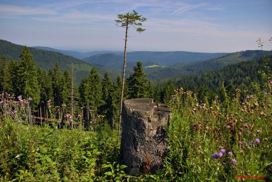 Von Bad Herrenalb zur Kreuzlehütte und bis Bad Wildbad (KONUS)