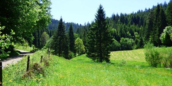 Das idyllische Sankenbachtal