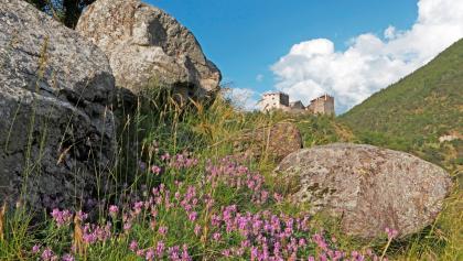 Blick auf die Burgruine Obermontani