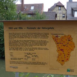 Schautafel am Hochwasserpfad, Neckargemünd