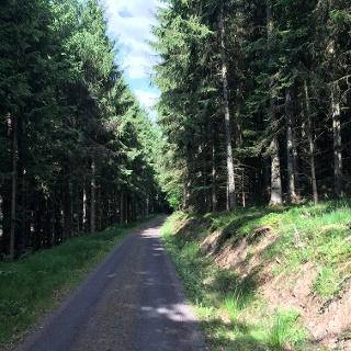 Wald bei Schalkenmehren