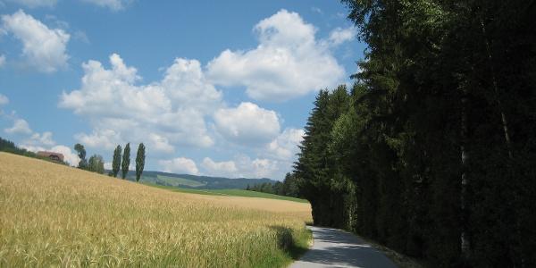 Wanderweg Wenigzell Richtung St. Jakob im Walde / Kraftpfad