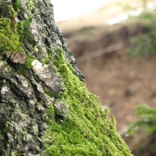 Waldbild