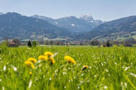 Grüne Wiese in Bad Feilnbach