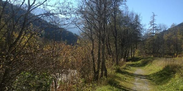 Wheelchair trail Fiesch-Fieschertal
