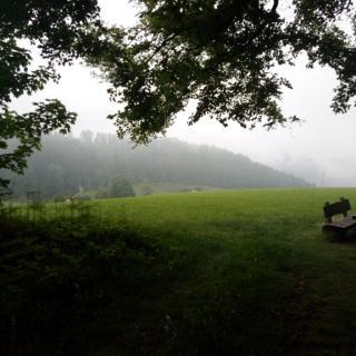 Ausblick in das Tal vom Waldrand aus