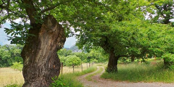 """The """"Cammino dei Ricci"""" (Chestnuts Walk) - Drena"""