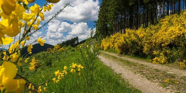 Wanderweg W1