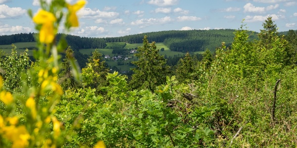 Blick Richtung Nesselbach