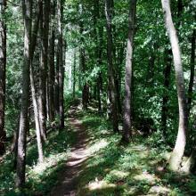Waldweg Scheffheu