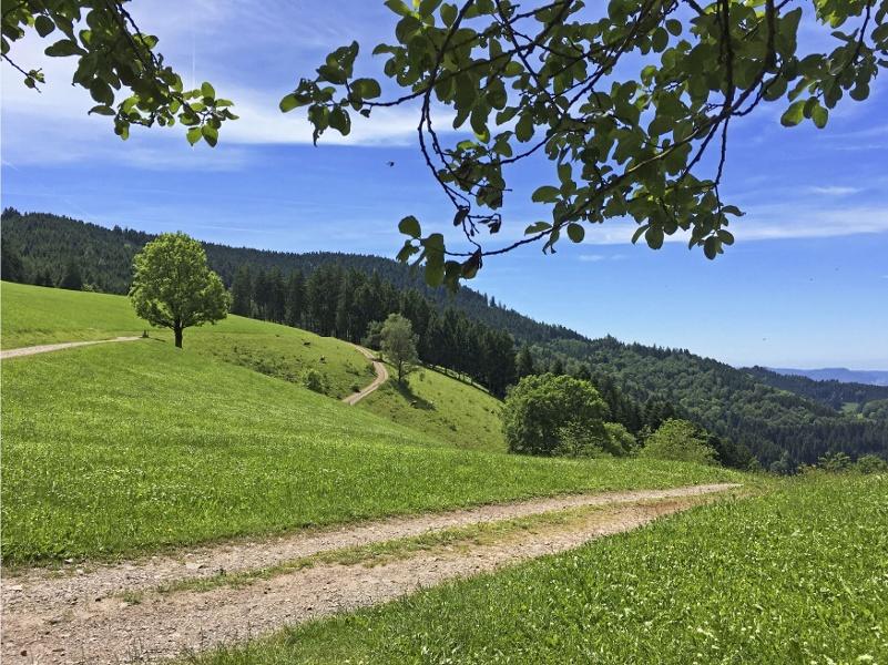 Oberwolfach Tour 5 - Rund um Oberwolfach