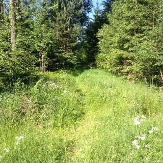 Durch den Hirschwald