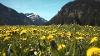 Frühjahrswandern im Tannheimer Tal   - © Quelle: Ferienregion Tannheimer Tal